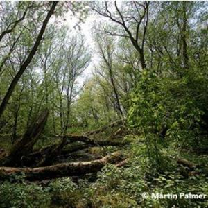 Stenner Woods