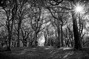 Sun bursting through the trees at Tandlehill Park, Oldham