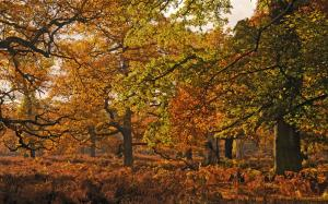 Autumn colours at Dunham Massey
