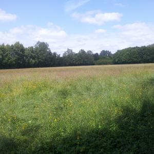 Urmston Meadows