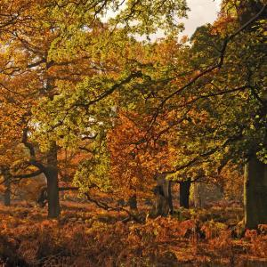 Autumn colours in Dunham Massey