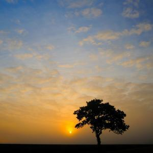 Winner of Terrific Trees category taken by Anthony Murden